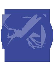 Controle de dengue na dedetizadora Bio Control